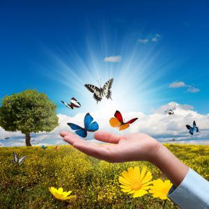 Environnement, maladies environnementales